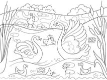 Childrens coloring book cartoon family of Swan on nature. Royalty Free Stock Photos