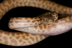Childrens Python Stock Image