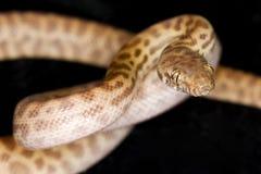 Childrens Python Stock Images