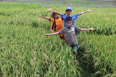 Childrens on rice field. Childrens walk on middle rice field after play some traditional games in Bade, Klego, Boyolali, Central of Java Stock Images