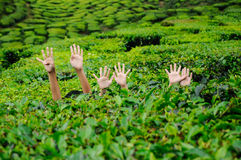 Childrens waving hand in the tea plantation Royalty Free Stock Image