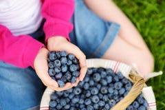 childs特写镜头递拿着新鲜的蓝莓摘在蓝莓农场 免版税库存图片