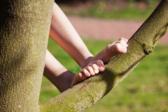 Childs feet on a tree Stock Image