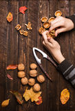 Childs-Hände mit ganzen Walnüssen und Herbstlaub der Walnusskerne Stockfotos