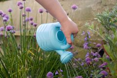 Childs hand with watering can. Childs hand with small plastic blue watering can Stock Photo