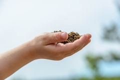 Childs hands with handful of earth Stock Image