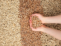 Childs hands holding wood pellets Stock Image