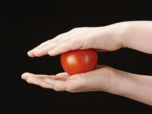Childs hands with tomatoe. On black background Royalty Free Stock Photos