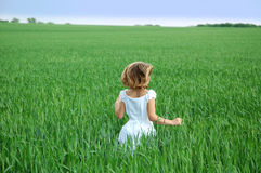 Childs Play. The back of a girl running in a green wheat field towards a blue sky Stock Images