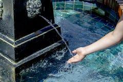 Childs ręki odbiorcza woda od lew głowy wodnej fontanny zdjęcia royalty free