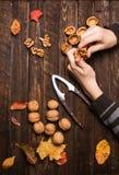 Childshanden met de gehele okkernoten van okkernootpitten en de herfstbladeren Stock Foto's