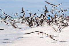Childsplay. Child running through sea birds at beach Stock Photo