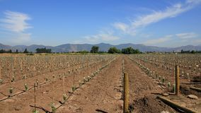 Chile 2015 lizenzfreie stockfotos