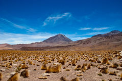 Chile Royalty Free Stock Images