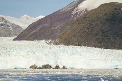 Chile - Amalia Glacier Landscape Stock Images