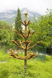 Chile (Chilean) araucaria. Latin name Araucaria araucana, also called as Monkey's tree, hills on background Stock Images