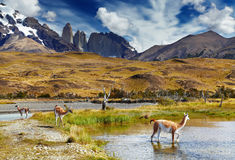 chile Del Paine patagonia torres Obraz Royalty Free