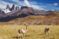 chile del paine patagoniatorres royaltyfri bild