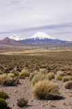 chile höglandvolcanoes Fotografering för Bildbyråer