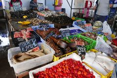 Chilean seafood at a fishmonger stall in Puerto Montt's market, Chile royalty free stock image
