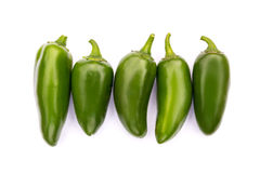 Chile Jalapeno hot chili pepper Royalty Free Stock Image