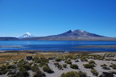 chile lauca park narodowy Fotografia Royalty Free