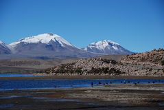 chile laucanationalpark Royaltyfri Bild
