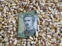 Chile, maize producing country, dry corn grains and chilean banknote of 1000 pesos. Yellow edible seed, agriculture and harvest, world cereal production royalty free stock photo