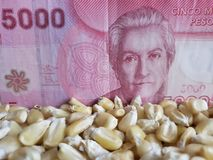 Chile, maize producing country, dry corn grains and chilean banknote of 5000 pesos. Yellow edible seed, agriculture and harvest, world cereal production stock photos