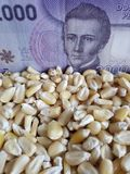 Chile, maize producing country, dry corn grains and chilean banknote of 2000 pesos. Yellow edible seed, agriculture and harvest, world cereal production royalty free stock photos