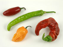 Chile medley. Assorted chile peppers Royalty Free Stock Photography