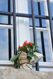 Chile peppar på fönstret Royaltyfria Bilder