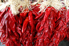 Chile Ristras royalty free stock photography