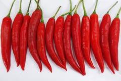 Chile rojo Imagen de archivo libre de regalías