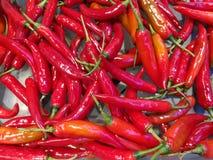 Chile rojo Imagen de archivo
