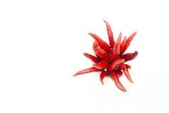 Chile rojo en el vidrio, flor determinada del chile, chile tailandés Foto de archivo libre de regalías