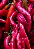 Chile rojo fresco Foto de archivo libre de regalías