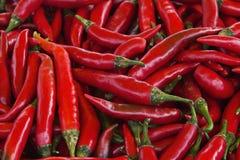 Chile rojo fresco Imágenes de archivo libres de regalías