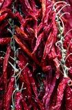 Chile rojo secado Fotos de archivo