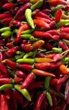 Chile rojo y verde Imágenes de archivo libres de regalías