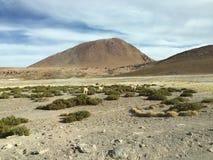Chile`s Atacama Desert Stock Image