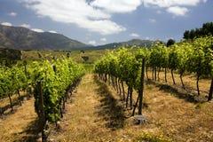 chile vingårdar royaltyfria bilder