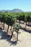 chile winnica Fotografia Stock