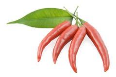 Chile y hoja de la pimienta roja Fotos de archivo