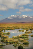 Chilean Atacama Desert Royalty Free Stock Photography