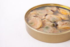 Chilean clams in a tin can Stock Image
