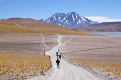 Chilean high plateau. Tourists walking in chilean high plateau Royalty Free Stock Images