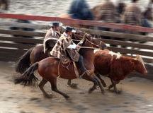 Chilean huasos in rodeo championship. Chilean huasos compete in rodeo championship Stock Image