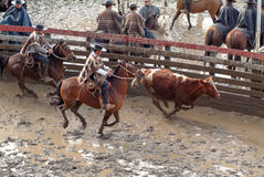 Chilean huasos in rodeo championship. Chilean huasos compete in rodeo championship Stock Photo