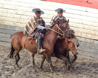 Chilean huasos in rodeo championship. Chilean huasos compete in rodeo championship Stock Photos